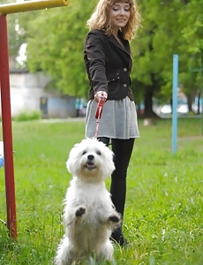 Blond walking the woman dog
